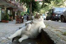 Søde katte / Katte