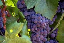 California Wines and Vines / California Wineries and Vineyards