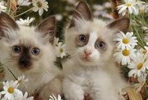 WE LOVE CATS DDS / Places to visit!
