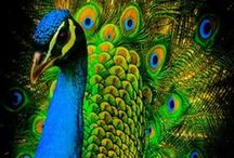 PEACOCK DDS / Places to visit!