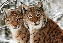 WILD CATS DDS / Places to visit!