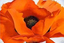 Artes - pinturas  3 - Flors