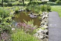 Pflanzen und Gärten / Inspiration für ein schönes Stück Natur im heimischen Garten!