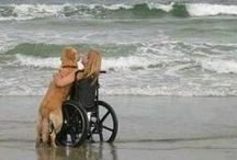 Therapy & Service Animals / Animals help.... / by Laurie Shields