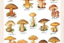 Champignons / Les champignons