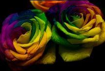 ! Rainbow Inspiration ! / All the colors of rainbow.