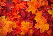 Outono Aconchegante