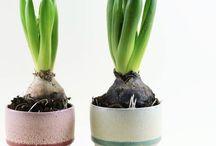 Vases and Flowerpots