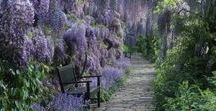 !Garden Ideas! / What I'd love to have in my future garden  #Garden #Flowers #Plants #Trees #GardenIdeas #Seasonal #FloralDecor