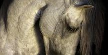 ! Ekaterina Druz Horse Photography. Russian Artists New Wave. Art Prints for Home Decor !