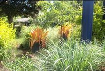 """Botanical Gardens / See our video """"Longwood In And Out"""" on our webpage http://www.themagicgarden.com/morts_videos.php"""