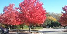 Fall Features / Landscape, photos, and videos of fall.