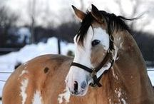 Horses ♥ / Most cute long faces I find~