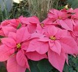 Holidays / features from  The Magic Garden