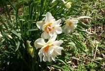 Perennials / Favorite perennials