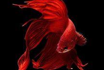 AQUARIUM / TANKS & FISHIES