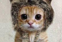 Adorably cute animalz