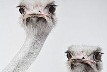 Birds / by Suzanna Arensman