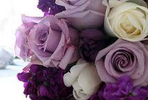 All Things Purple