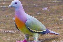 l'm a little pigeon