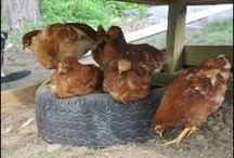 Animals and Guides to/on the Farm / Homesteading & Animal Raising