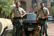 LASD K9 and other Critters / by Los Angeles County Sheriff's Department