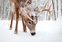Ice/Snow/Winter