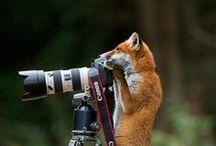 фото природа