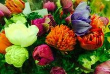 Potomac Floral Fresh Cut flowers / This is a showcase of all the gorgeous fresh cut flowers we carry at Potomac Floral Wholesale