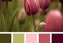 Цвет / Сочетание цветов