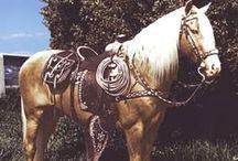 Beautiful Horses / Beautiful Horses