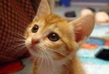 Kitties / by Rachel Wetten