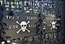 ~ Poisonous Plants ~ / by Belinda Mullins