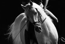 ~Horse~