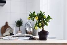 HOME DETAILS / One small detail can change everything... Stylish details for cozy and modern home
