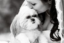 Wedding Pets / by Beverly Hills Jewelers