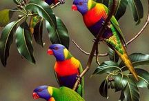 Birds , plants and animals of the Royal National Park Australia / Flora and fauna in our back yard.