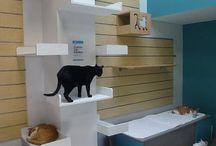 CAT+Cat furniture!