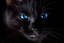 The Colour Blues / The colour Blue