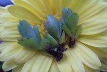 Succulents And Unique Plants / Succulent plants, air plants, cacti, unique plants and ways to display them Beneaththemagnolia.etsy.com