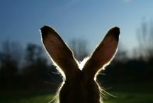 bunnies / by 356 porsche
