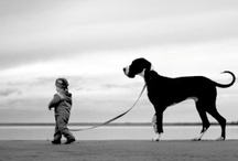Walkin' The Dog / by Judy Hager
