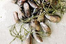 Au menu: fish & seafood