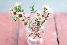 Wonderful Waxflower