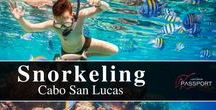 Cabo San Lucas Snorkeling / In Los Cabos, you will get one of the best snorkeling expedition experiences as this region is known as the Aquarium of the World. Discover and see more on https://www.loscabospassport.com/