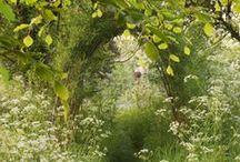 Gardening & outdoor spaces