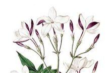 Fragranze / Fragranze naturali, aromaterapia ed oli essenziali  http://www.flowertales.it/categorie/fragranze/