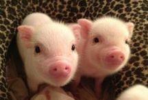 Cutest Animals / by Cutest Paw