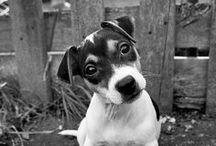 Dogs & Cats! / by Natalia Delgadillo