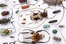 SPACE KEVERS / COLOURFUL BEETLES